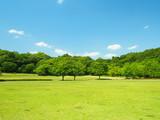 草原と林風景
