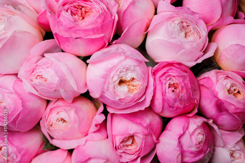Staande foto Roses fresh pink peony flower texture background