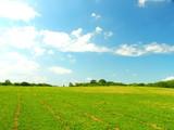 公園の草原と林風景