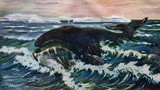 Bowhead whale (Balaena mysticetus) from Brehm