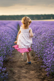 Among the lavender fields.