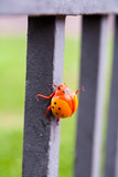 A figurine of a large bright orange beetle - ladybird on forged fence.