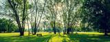 sunny summer park wi...