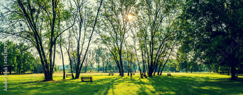 sunny summer park with trees and green grass - 114338792
