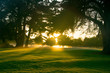 Golf course at dawn backlit by rising sun..