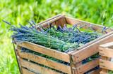 Lavender in the box