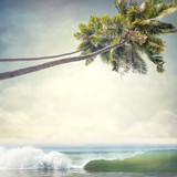 tropical background - 114371972