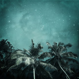 tropical background - 114372724