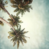 tropical background - 114373163
