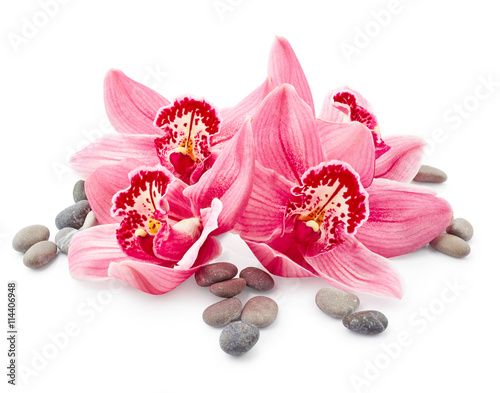 Orchid flowers and stones - 114406948