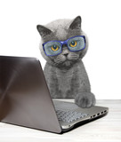 Cat using laptop or notebook
