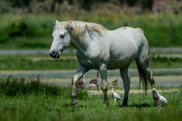 Cavalli allo stato brado © scabrn