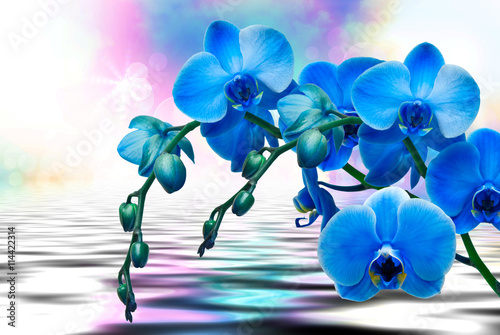 Orchid flower close up - 114422314