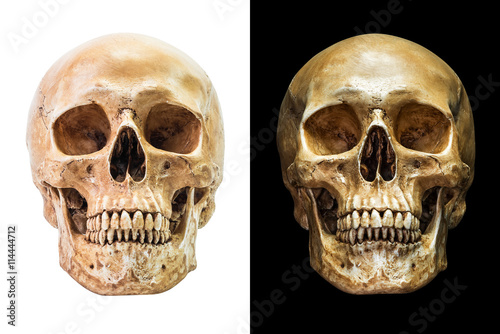 Human skull isolated Poster
