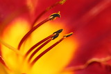Lily macro wallpaper - 114464905