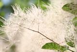 Plant macro - 114464910