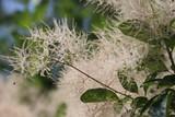 Plant macro - 114464924