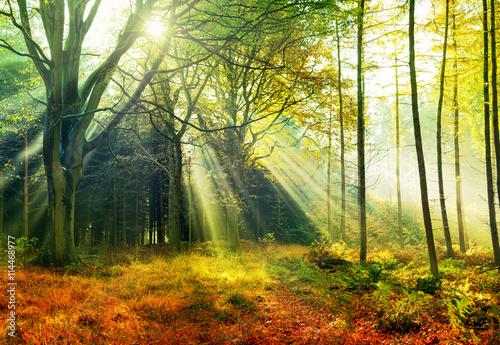 Morgensonne im Herbstwald