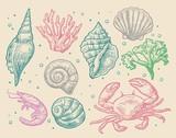 Set sea shell, coral, crab and shrimp.