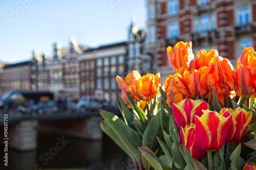 Poster Tulpen in Amsterdam