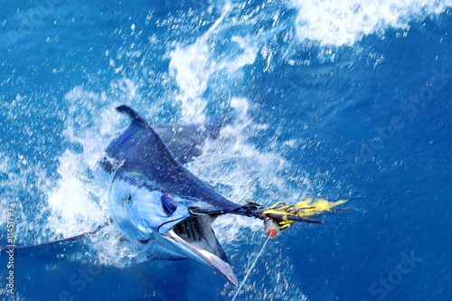 Blue marlin on the hook Poster