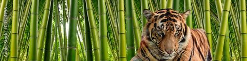 Tygrys w wysokich łodygach gęstego zielonego bambusa w otoczeniu dżungli.