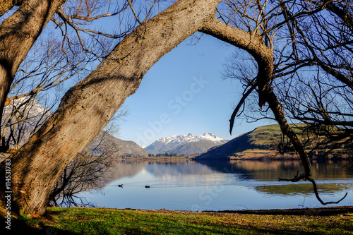 A big tree at the bank of Lake Hayes, New Zealand Poster