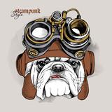 Obraz bulldoga w kasku Steampunk.