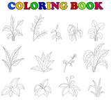 coloring book of set tropical plant