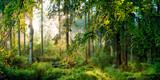 Fototapety Sonnenaufgang im Wald