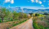 Fototapety Beautiful Landscape of Majorca Spain Balearic Islands