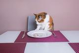 кошка сидит за столом