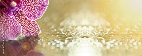 fototapeta na ścianę Website banner of pink orchid flower petals