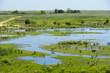 Natural Habitat in the Wetlands