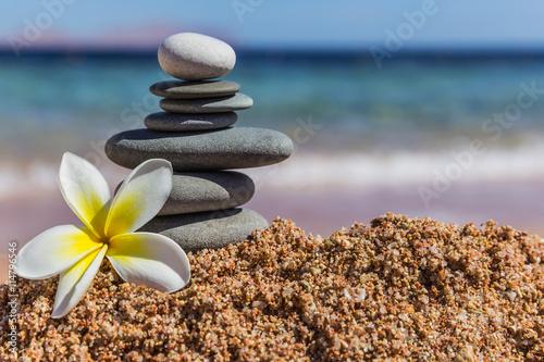 Aluminium Plumeria plumeria flower close up on sea beach