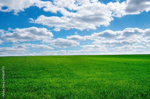 Fotobehang Groene Image of green grass field and bright blue sky