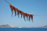 octopus drying on the clothesline
