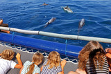 Young tourists during a dolphin watching