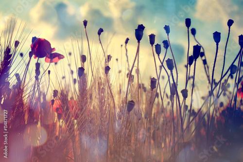 Zdjęcia na płótnie, fototapety na wymiar, obrazy na ścianę : Wheat field and poppies