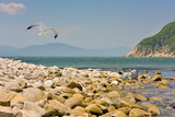 Wonderful world of nature/Photos landscapes with a flying Seagull and a rest in the sun of the seal of the Michelson.