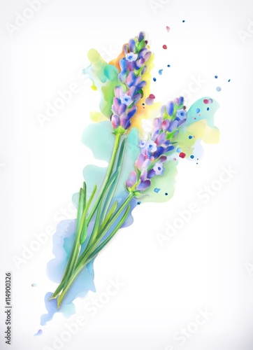 Zdjęcia na płótnie, fototapety, obrazy : Lavender flowers, watercolor painting, mesh vector