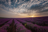 Sunrise at lavender field, near Burgas city, Bulgaria