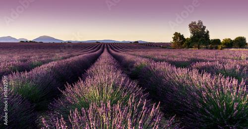 Keuken foto achterwand Lavendel champ de lavande