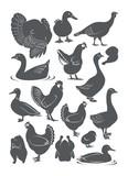 goose, duck, chicken