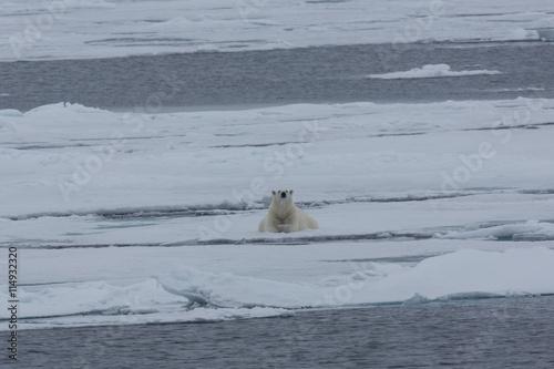 Fotobehang Ijsbeer Eisbär, Eisbären, Packeis, Eis, Spitzbergen, Artik, Polarkreis, Nordpol, Norwegen, Tier, Säugetier, Wasser