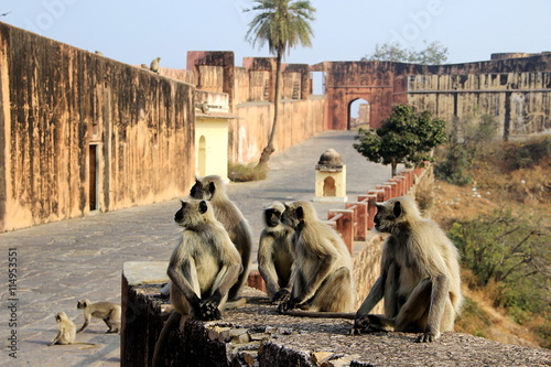 Monkeys Galore at Monument Plakat