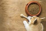A corgi dog biting a dog bone besides a bowl of kibble food
