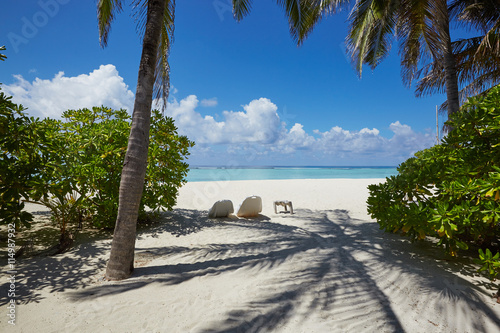 Palms and mangrove trees on Maldives