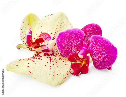 Zdjęcia na płótnie, fototapety, obrazy : Purple and yellow orchid flowers