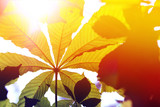 Colored leaf background - 115009770